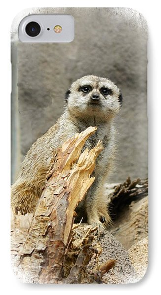 Meerkat IPhone Case by Michelle Frizzell-Thompson