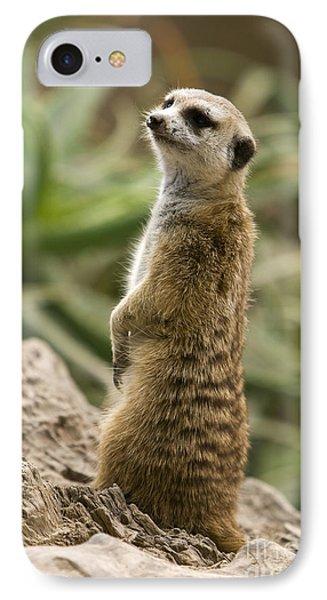 Meerkat Mongoose Portrait IPhone Case by David Millenheft