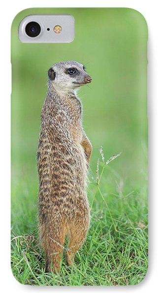 Meerkat Standing On Guard Duty IPhone Case by Peter Chadwick