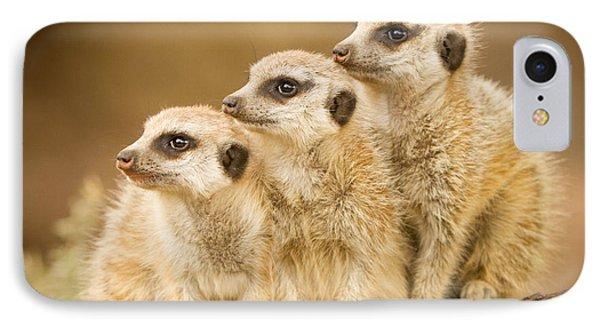 Meerkats IPhone Case by Craig Dingle