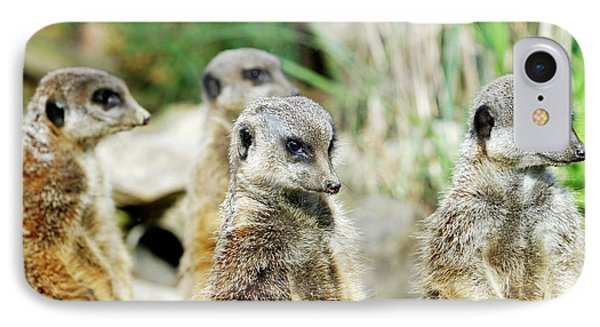 Meerkat iPhone 7 Case - Meerkats by Heiti Paves