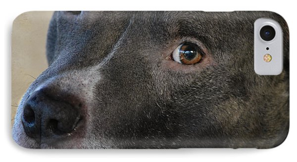 IPhone Case featuring the photograph Meet Bully by Linda Segerson