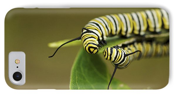 Meeting In The Middle - Monarch Caterpillars IPhone Case by Jane Eleanor Nicholas