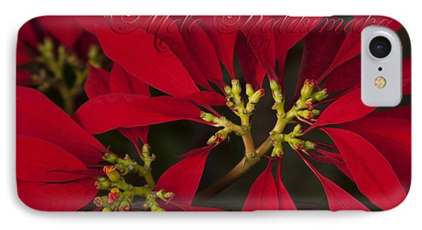 Mele Kalikimaka - Poinsettia  - Euphorbia Pulcherrima Phone Case by Sharon Mau