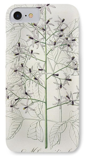 Melia Azedarach From Phytographie IPhone Case