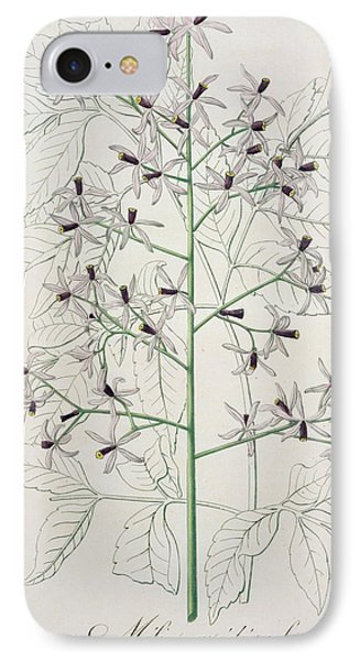 Melia Azedarach From 'phytographie Medicale' By Joseph Roques Phone Case by L F J Hoquart