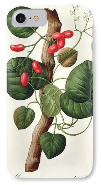 Menispermum IPhone Case by LFJ Hoquart