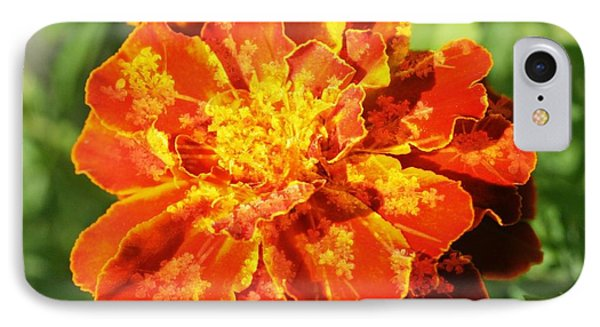 Merry Marigold IPhone Case by Barbara S Nickerson