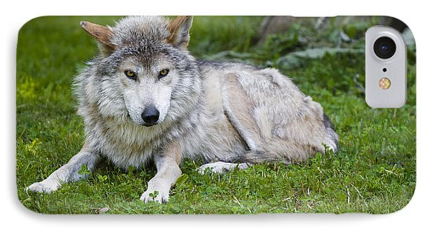 IPhone Case featuring the photograph Mexican Gray Wolf by Sebastian Musial