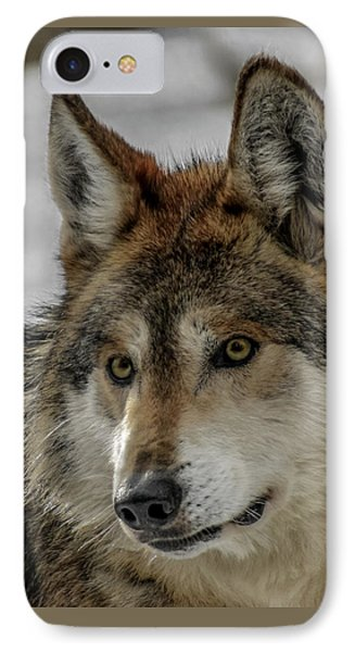 Mexican Grey Wolf Upclose Phone Case by Ernie Echols