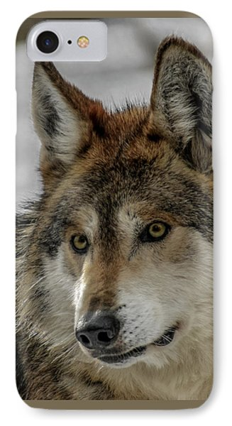Mexican Grey Wolf Upclose IPhone Case by Ernie Echols