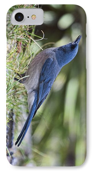Mexican Jay Drinking - Phone Case Design IPhone Case by Gregory Scott