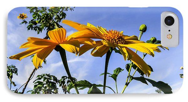 Mexican Sunflower IPhone Case by Zina Stromberg