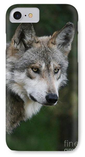 Mexican Wolf #4 IPhone Case