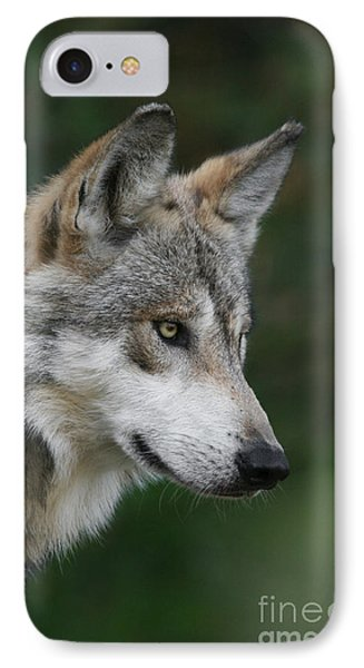 Mexican Wolf #5 IPhone Case