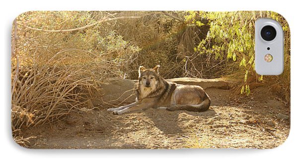 Mexican Wolf  IPhone Case by Barbara Snyder
