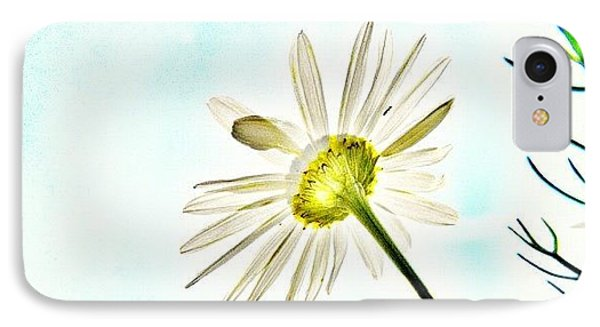 #mgmarts #daisy #flower #morning IPhone Case by Marianna Mills