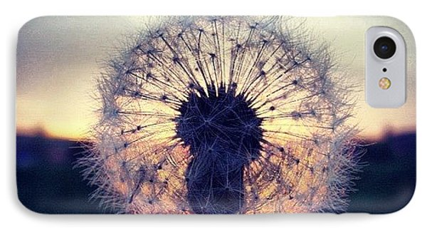 #mgmarts #dandelion #sunset #simple IPhone Case by Marianna Mills