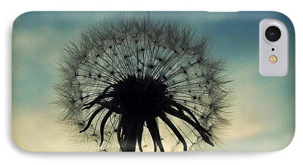 #mgmarts #dandelion #weed #sunset #sun IPhone Case by Marianna Mills