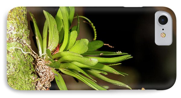 Micro Orchid IPhone Case by Dr Morley Read