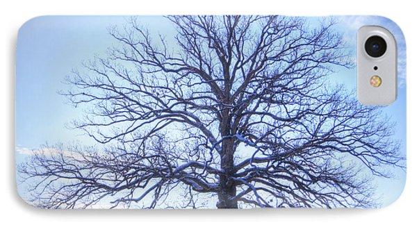 Mighty Oak In Winter IPhone Case by Cricket Hackmann
