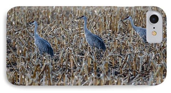Migrating Sandhill Cranes IPhone Case