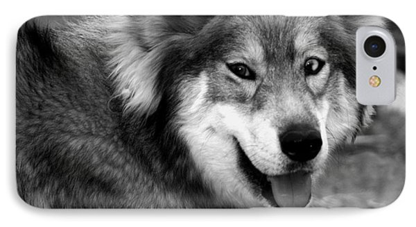 Miley The Husky With Blue And Brown Eyes - Black And White IPhone Case by Doc Braham
