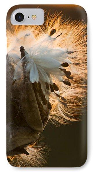Milkweed Seed Pod Phone Case by Adam Romanowicz