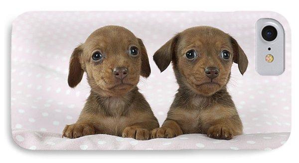 Miniature Dachshund Puppies IPhone Case by John Daniels