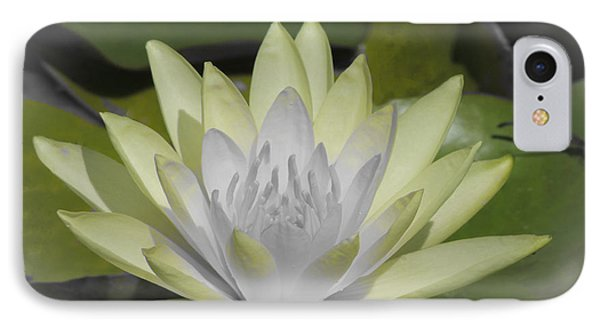 IPhone Case featuring the photograph Mint by Teresa Schomig