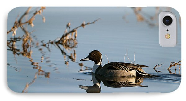 Northern Pintail Mirror Image IPhone Case by Martha Marks