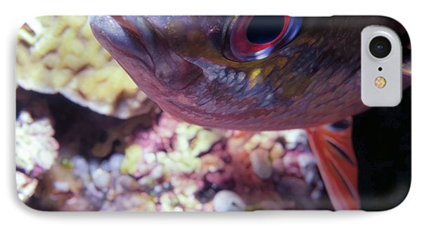 Miscellaneous Fish 5 Phone Case by Dawn Eshelman