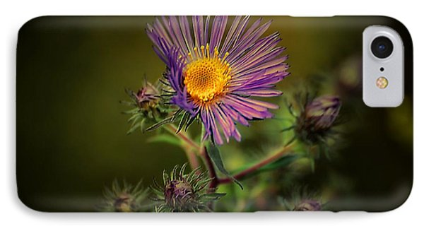 IPhone Case featuring the photograph Miss Aster by Beth Akerman