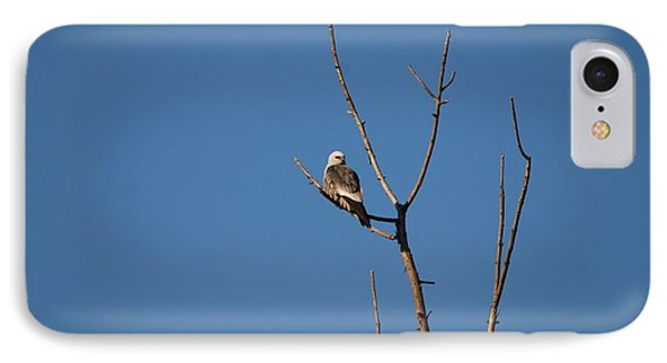IPhone Case featuring the photograph Mississippi Kite by Mark McReynolds