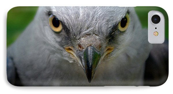 Mississippi Kite Stare IPhone Case