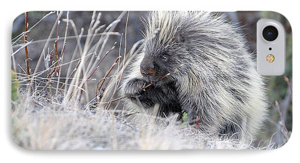 IPhone Case featuring the photograph Mister Porcupine - Denali Alaska by Dyle   Warren