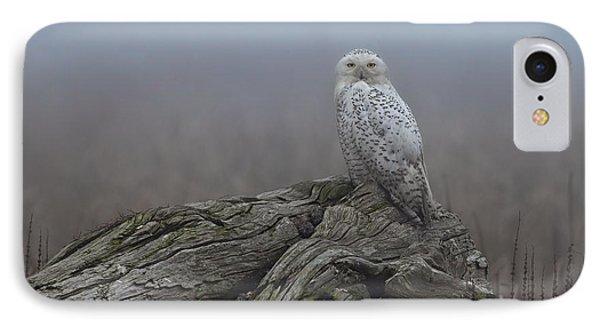 Misty Morning Snowy Owl IPhone Case by Daniel Behm