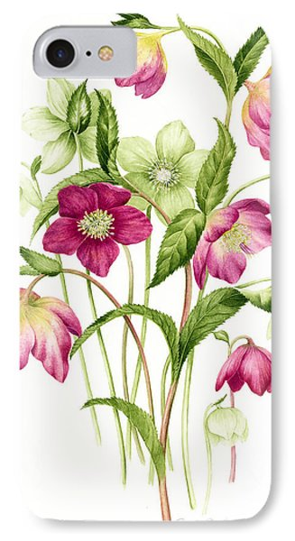 Mixed Hellebores IPhone Case by Sally Crosthwaite