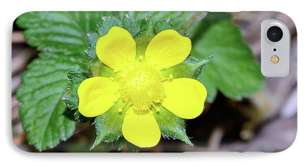 Mock Strawberry (duchesnea Indica) Flower IPhone Case by Bruno Petriglia