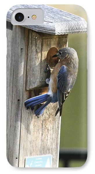 Mom Bluebird Investigates IPhone Case by Jeanne Kay Juhos