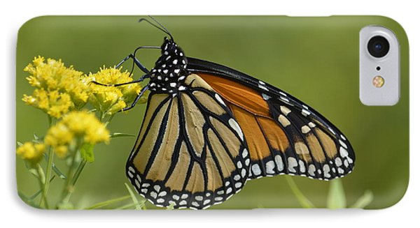 Monarch 2014 Phone Case by Randy Bodkins