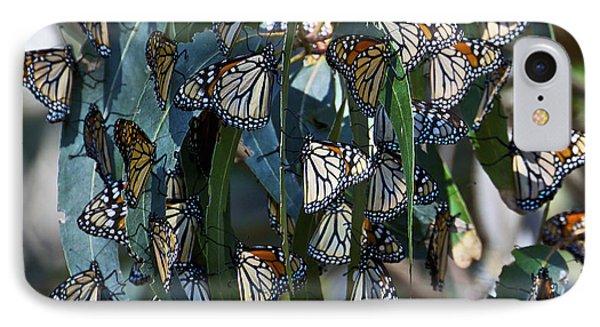 Monarch Butterflies Natural Bridges IPhone Case