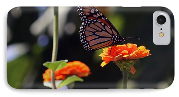 Monarch Butterfly And Orange Zinnias IPhone Case by Kay Novy