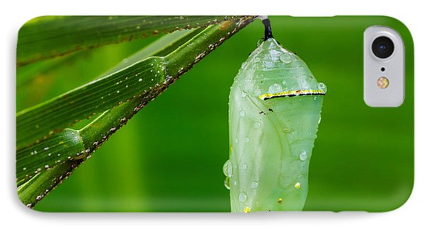 Monarch Butterfly Chrysalis Phone Case by Dawna  Moore Photography