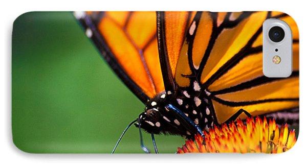 Monarch Butterfly Headshot IPhone Case by Bob Orsillo