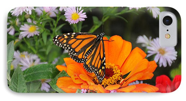 Monarch Butterfly IPhone Case by Katie Wing Vigil