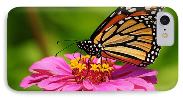 IPhone Case featuring the photograph Monarch Butterfly On Zinnia by Olivia Hardwicke