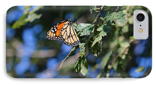 IPhone Case featuring the photograph Monarch Butterfly by Rebecca Davis