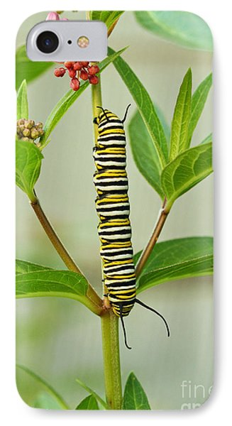 IPhone Case featuring the photograph Monarch Caterpillar And Milkweed by Steve Augustin