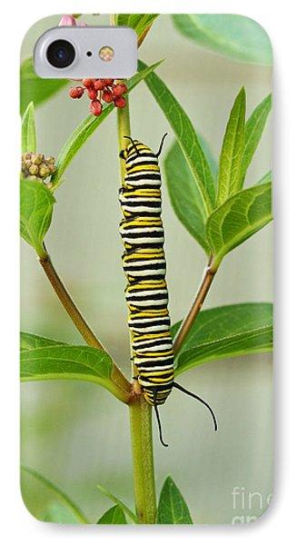 Monarch Caterpillar And Milkweed IPhone Case